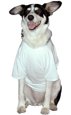Dog wearing white shirt Rooms Revamped Interior Design