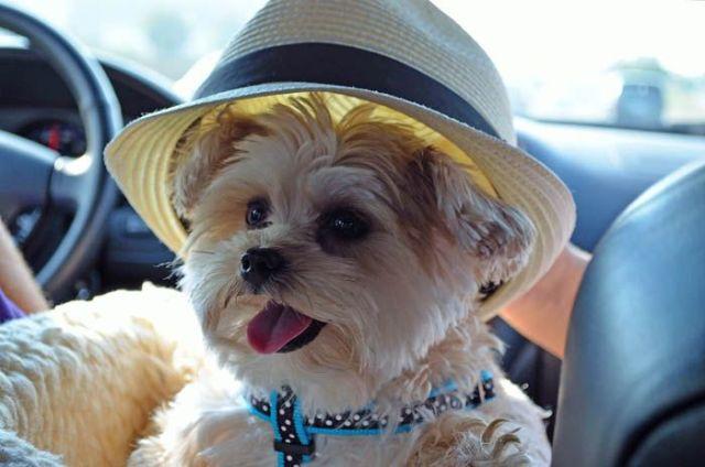 Dog wearing straw hat Rooms Revamped Interior Design