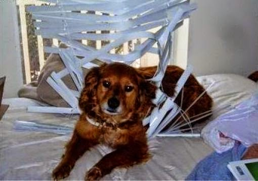 Dog caught in blinds Rooms Revamped Interior Design