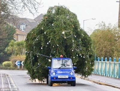 Little car towing large tree