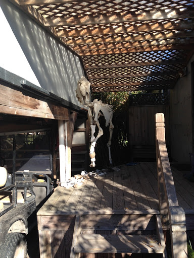 This horse skeleton hangs by Gogo Ferguson's home and jewelry shop by Greyfield Inn.