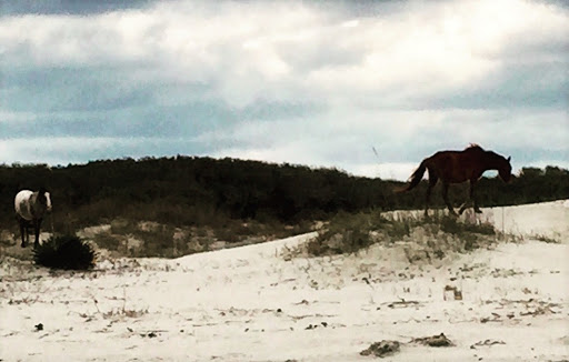 Wild horses roaming the beach on Cumberland Island
